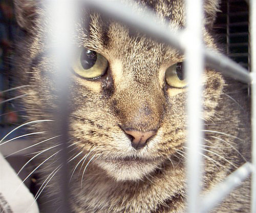 What's Your Take: Did JFK Cats Receive a Death Sentence?