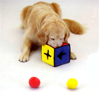 Pampered Pals: Puzzle Toys For Persistent Pups