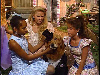 Think You Know Your Classic TV Doggies and Kitties?