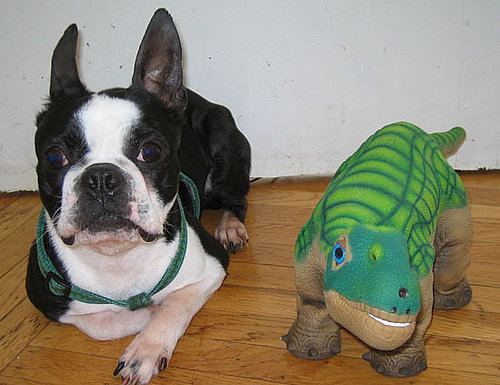 """Boston Terror"" Chronicles: North vs. the Pleo"