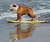 Surf&#039;s Up, Dogs!