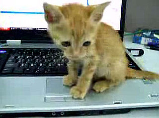 Do Tell: Are Your Cats Computer Obsessed?