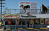 Dov Charney Loses Dog (Maybe): In the LINK of an Eye!