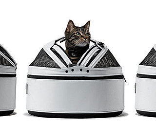 PetSugar's Sleepypod Giveaway Ends Today!