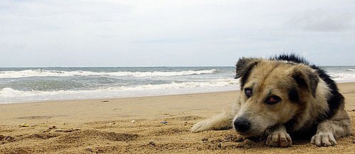 Do Your Dogs Do Their Business at the Beach?