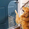Scratch Protector Saves Doors From Dogs&#039; Claws
