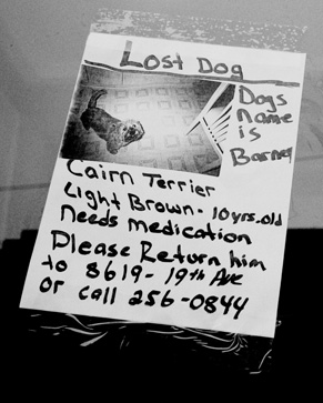 Has Your Pet Ever Gotten Lost?