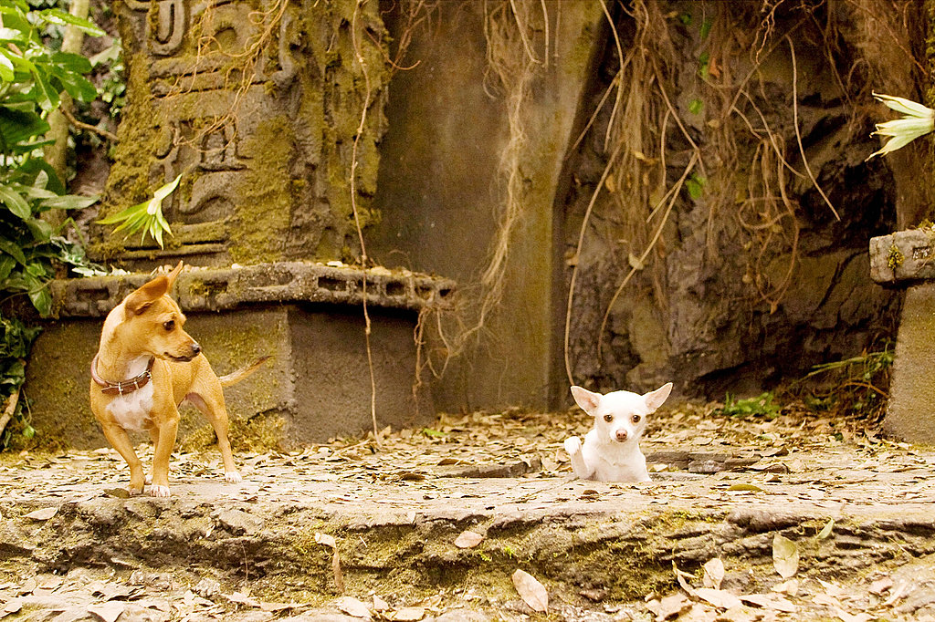 Behind-the-Scenes: The Furry Cast of Beverly Hills Chihuahua