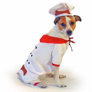 Come PetMarking With Me: Halloween Costumes For Pets