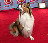 TV Guide's Top Ten Television Dogs