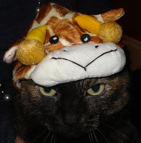 Giraffe Head . . . Check.