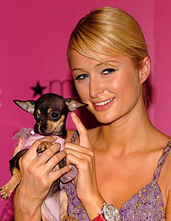 Dr. Paris Hilton, Veterinarian?
