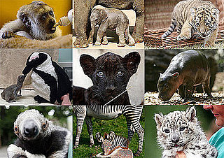 Who's the Cutest Zoo Animal Born in 2008?
