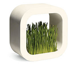 MoMA Store - Plant Frame ($35)
