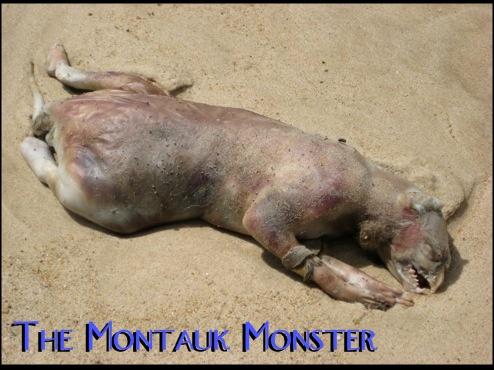 "FOX News talks about the ""Montauk Monster"" AKA Monty"
