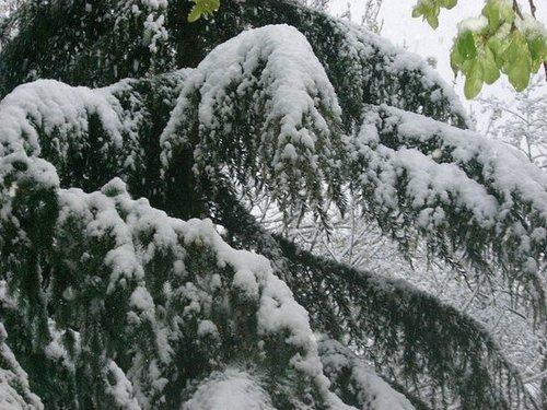 More Spring Snow