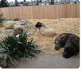 If you're plagued with a muddy yard this Winter, do as Shelterrific did and cover it with hay.
