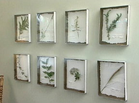 DIY: Botanical Prints