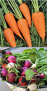 Casa Quickie: Plant Carrots With Radishes