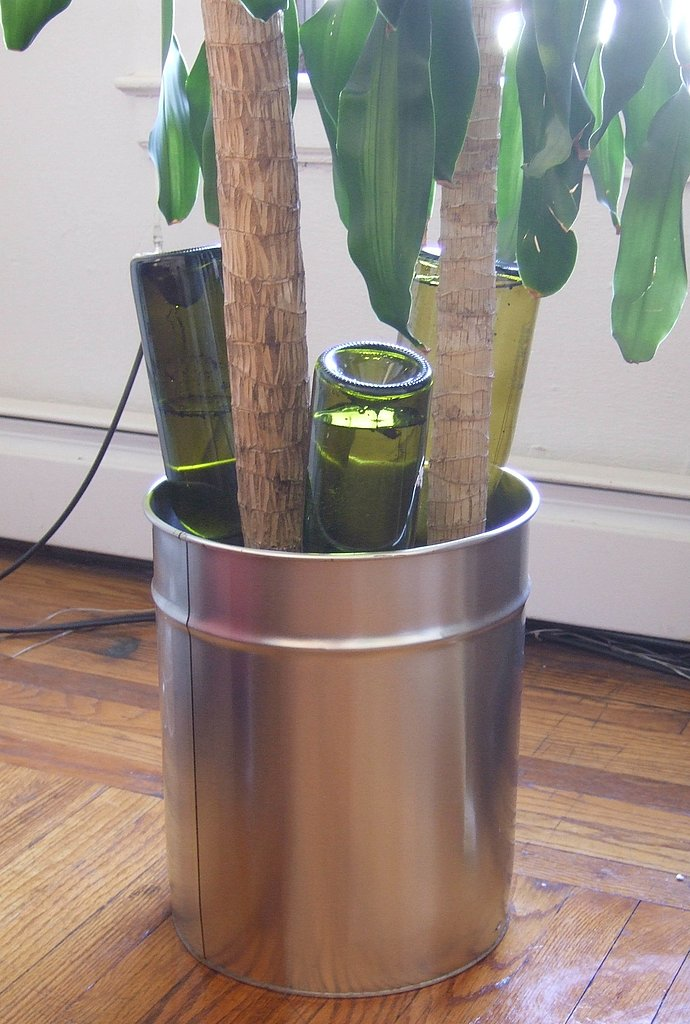 Wine bottles are repurposed as watering containers. The wine bottles are filled with water, and then sunk into the soil in the pot. The bottles slowly release the water, keeping this houseplant well hydrated and happy.