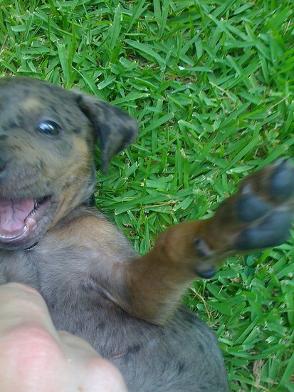He is such a happy puppy!