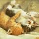 KittensRkute