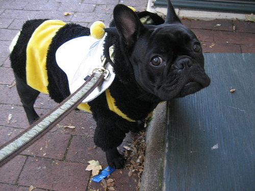 Babar the Bumble Bee