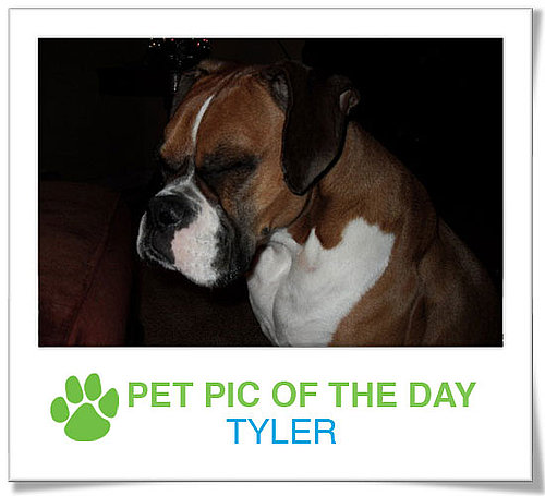 Pet pics on PetSugar 2009-02-13 09:30:27
