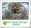 Pet Pics on PetSugar 2009-03-04 09:30:03