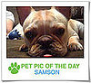 Pet Pics on PetSugar 2009-03-16 09:30:15