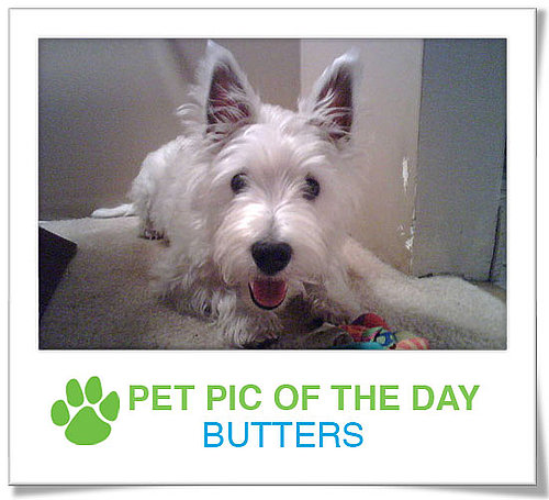 Pet Pics on PetSugar 2009-03-13 09:30:18