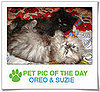 Pet Pics on PetSugar 2009-03-18 09:30:50