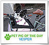 Pet Pics on PetSugar 2009-03-25 09:30:31