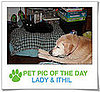 Pet Pics on PetSugar 2009-04-13 09:25:00
