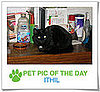 Pet Pics on PetSugar 2009-04-08 09:30:22