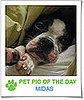 Pet Pics on PetSugar 2009-04-21 09:00:32