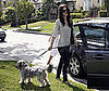 Photo Slide of Rachel Bilson With Her Dog in LA