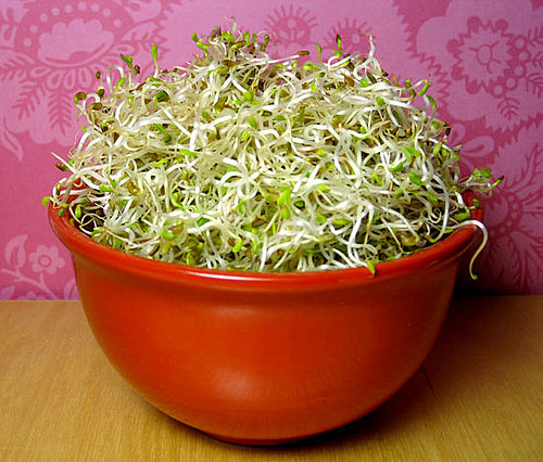 How to Make Your Own Alfalfa Sprouts