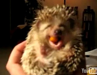 Cute Alert: Baby Hedgehog Eats a Carrot