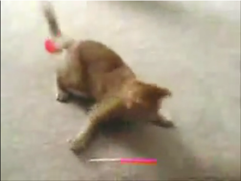Cat Vs. Laser Pointer