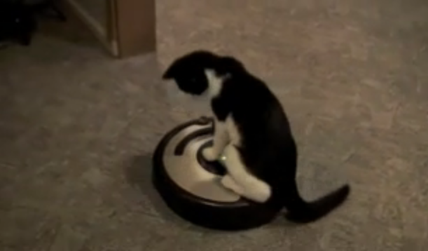 Cat Vs. Roomba
