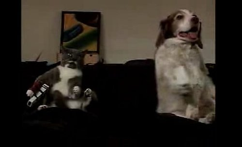 Cat and Dog Vs. Wii