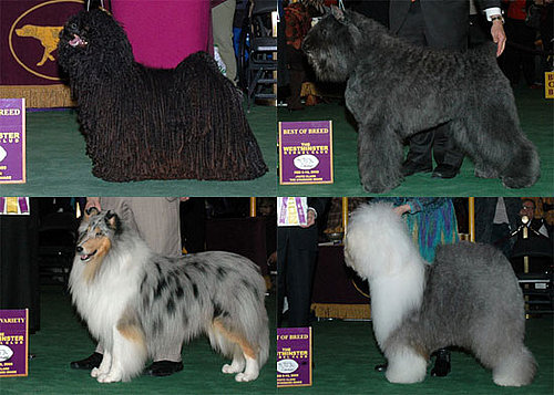2009 Westminster Winners: Herding Group