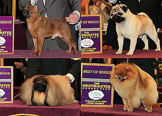 2009 Westminster Winners: Toy Group