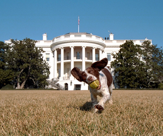Which Presidential Surname's Most Popular For Pets?