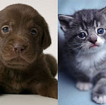 Quiz: Kits or Pups?