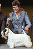 Chamin Wins the 2009 Crufts Dog Show!