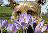 Does Your Dog Stop and Smell the Flowers?