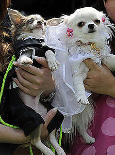 Freaky or Fabulous: Pet Weddings?