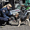 I Work With Animals! Paw Nation Interviews an Animal Cop